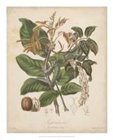 """Botanicals VI by Elizabeth Twining - 18"""" x 22"""""""
