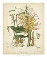 Botanicals VII Fine Art Print