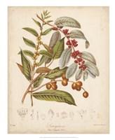"Botanicals VIII by Elizabeth Twining - 18"" x 22"""