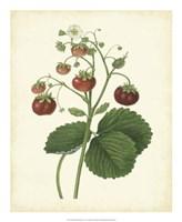 "Plantation Strawberries I - 18"" x 22"""