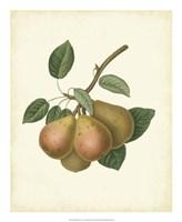 """Plantation Pears I - 18"""" x 22"""""""