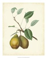 "Plantation Pears II - 18"" x 22"""