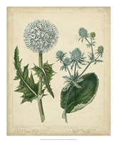 Cottage Florals III Fine Art Print