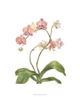 Orchid Study IV Fine Art Print