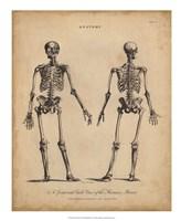 Anatomy Study I Fine Art Print