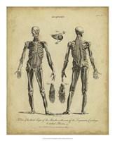Anatomy Study II Fine Art Print