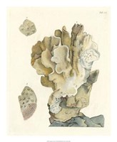 "Antique Coral IV by Vision Studio - 18"" x 22"""