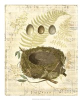"""Melodic Nest & Eggs I by Vision Studio - 18"""" x 22"""" - $27.99"""