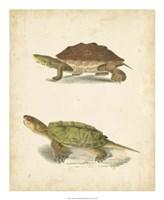 Turtle Duo II Fine Art Print