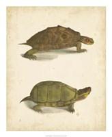 Turtle Duo IV Fine Art Print