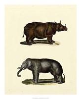 """18"""" x 22"""" Rhinoceros"""
