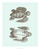 "Loggerhead Turtles I by Vision Studio - 18"" x 22"", FulcrumGallery.com brand"