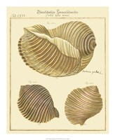 Antique Martini Shells I Fine Art Print