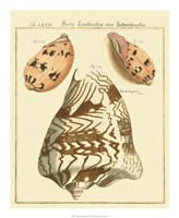 Antique Martini Shells II Fine Art Print