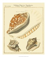 Antique Martini Shells III Fine Art Print