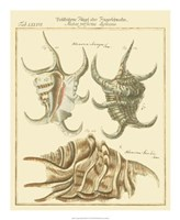 Antique Martini Shells IV Fine Art Print
