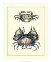 "18"" x 22"" Crab Pictures"