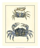"Antique Blue Crabs II by Vision Studio - 18"" x 22"""