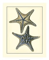 "Antique Blue Starfish II by Vision Studio - 18"" x 22"""