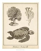 "Sea Turtle Study I by Vision Studio - 18"" x 22"""