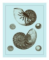 "Tinted Shells on Aqua I by Vision Studio - 18"" x 22"", FulcrumGallery.com brand"