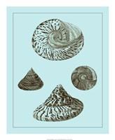 "Tinted Shells on Aqua IV by Vision Studio - 18"" x 22"", FulcrumGallery.com brand"