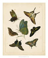 "Antique Entomology I by Vision Studio - 18"" x 22"""