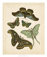 "Antique Entomology II by Vision Studio - 18"" x 22"""