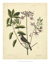 Bird & Botanical I Fine Art Print