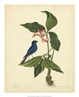 Bird & Botanical IV Fine Art Print
