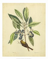 Bird & Botanical V Fine Art Print
