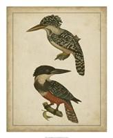 "Vintage Kingfishers II - 18"" x 22"", FulcrumGallery.com brand"