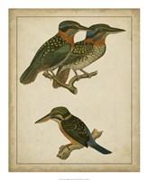 "Vintage Kingfishers III - 18"" x 22"", FulcrumGallery.com brand"