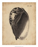 """Vintage Diderot Shell IV by Vision Studio - 18"""" x 22"""""""