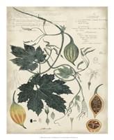 Botanical by Descube I Fine Art Print