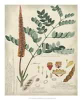 Botanical by Descube II Fine Art Print