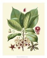 "Botanical Glory I by Vision Studio - 18"" x 22"""