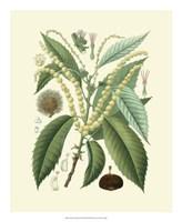 "Botanical Glory II by Vision Studio - 18"" x 22"""