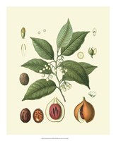 "Botanical Glory III by Vision Studio - 18"" x 22"""