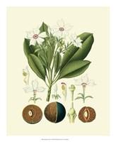 "Botanical Glory IV by Vision Studio - 18"" x 22"""