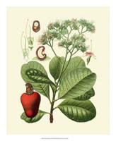 """Botanical Glory V by Vision Studio - 18"""" x 22"""""""