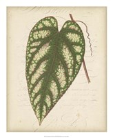 "Textured Leaf Study II by Vision Studio - 18"" x 22"" - $27.99"