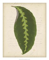 "Textured Leaf Study III by Vision Studio - 18"" x 22"" - $27.99"