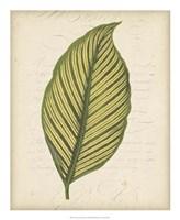 "Textured Leaf Study IV by Vision Studio - 18"" x 22"" - $27.99"