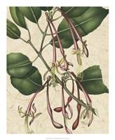 "Botanic Beauty I by Vision Studio - 18"" x 22"""