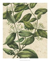 "Botanic Beauty III by Vision Studio - 18"" x 22"""
