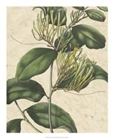 "Botanic Beauty IV by Vision Studio - 18"" x 22"""