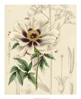 """Floral Pairings II by Vision Studio - 18"""" x 22"""", FulcrumGallery.com brand"""