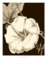 "Glorious Blooms II by Vision Studio - 18"" x 22"""