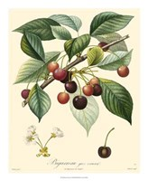 "Cherries by Pancrace Bessa - 18"" x 22"""